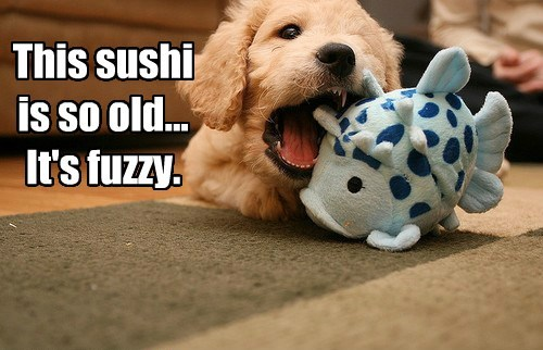 chew toy funny sushi - 8150726400