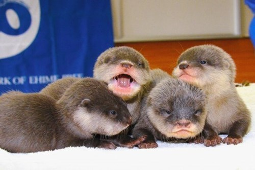 Babies siblings cute otters