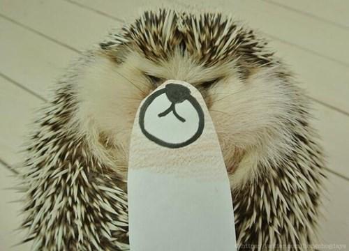 Hedgehog - day attp/a.