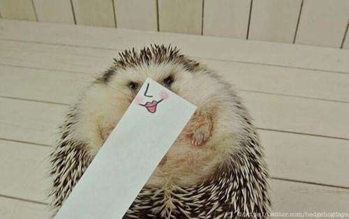Hedgehog - A witter.oom/hedgehogdays