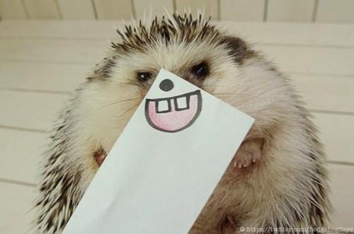 Hedgehog - Ohttpr://twanaom hedge.ordays