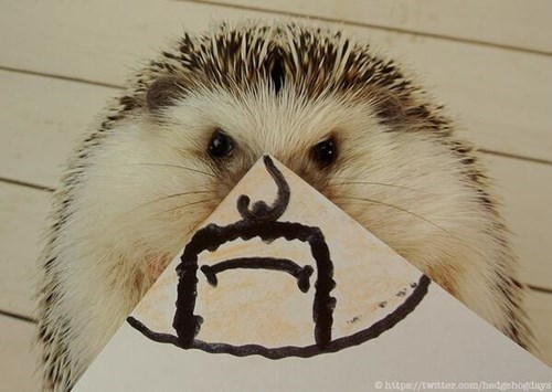 Hedgehog - Chttpa//twitter.oom/hedgehogdays