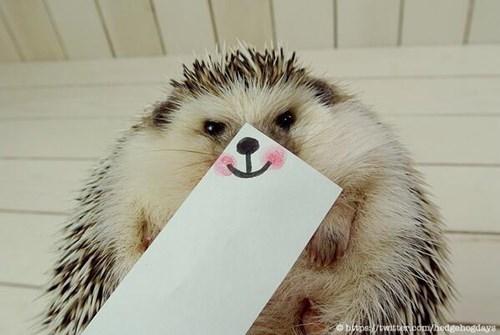 Hedgehog - obpswitte.com/hedgehogdays