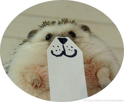 Bear - Ohttps://twitter.com/hedgehog