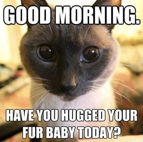 cute hugs fur baby Cats - 8150789888