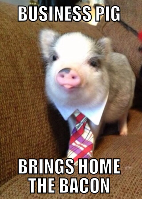 business pig,puns,pig,bacon