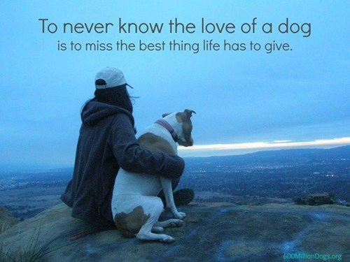 dogs,life,pets,gift,Words Of Wisdom