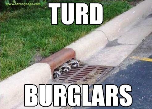 burglars,funny,poop,raccoons