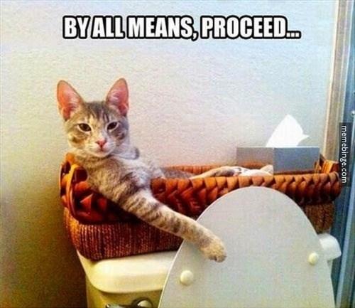 Cats bathroom funny - 8150936832