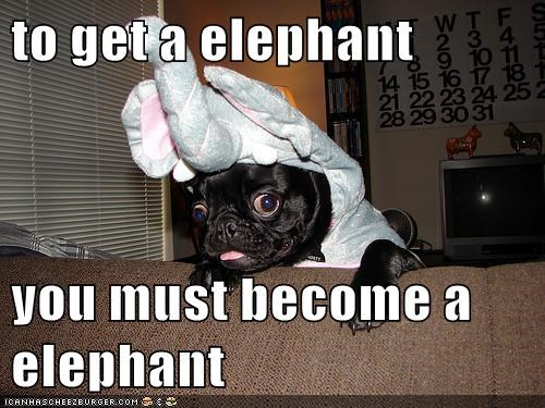 costume,dogs,elephants