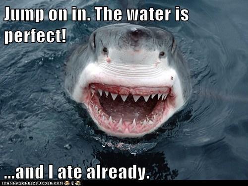 swimming sharks funny - 8151984128