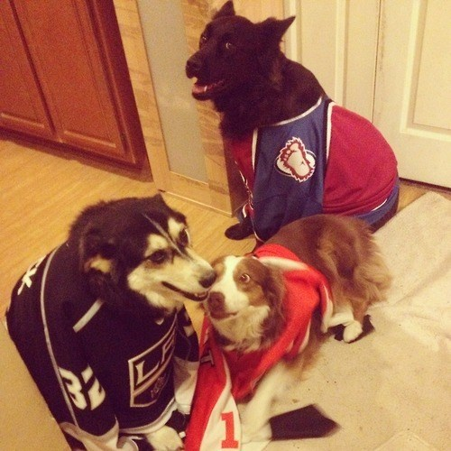 dogs nhl playoffs sports hockey NHL - 8151990016