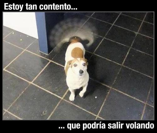 perros Memes animales - 8152066048