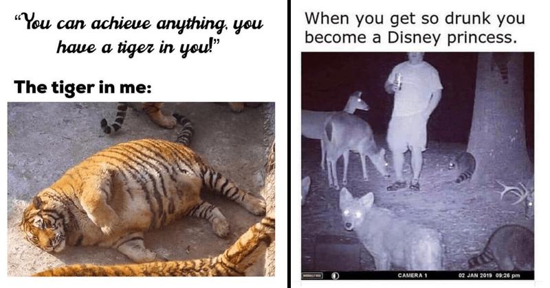 Funny memes, silly memes, random memes, cats, cat memes, tigers, animal memes.