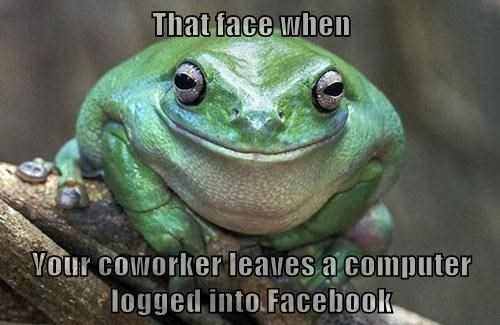 busted facebook funny frogs - 8152148480