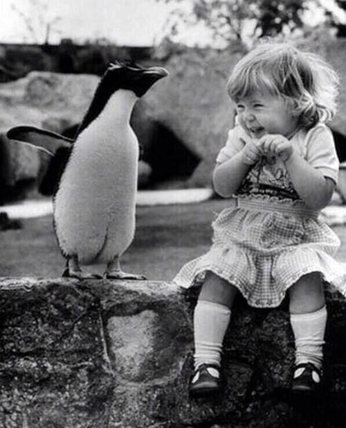 penguins cute smile - 8152170752