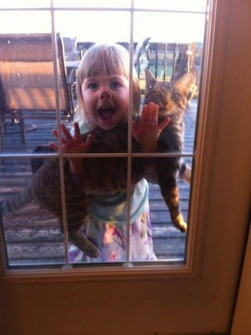 kids,windows,cute,Cats
