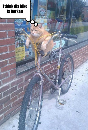 bikes Cats funny - 8152255232