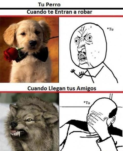 bromas perros Memes curiosidades animales - 8152292864