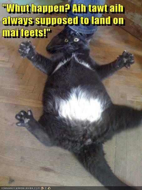 Cats funny bad landing - 8152571648