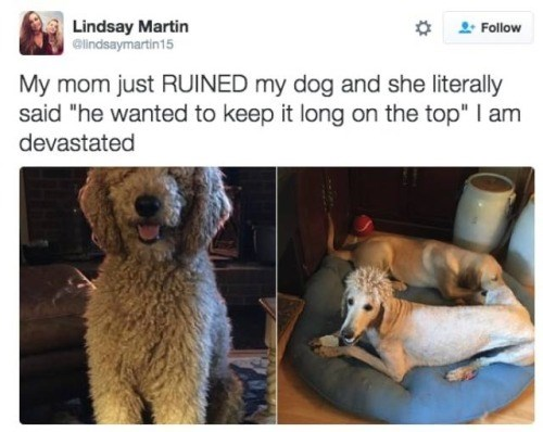 funny memes animal memes animals - 8152837