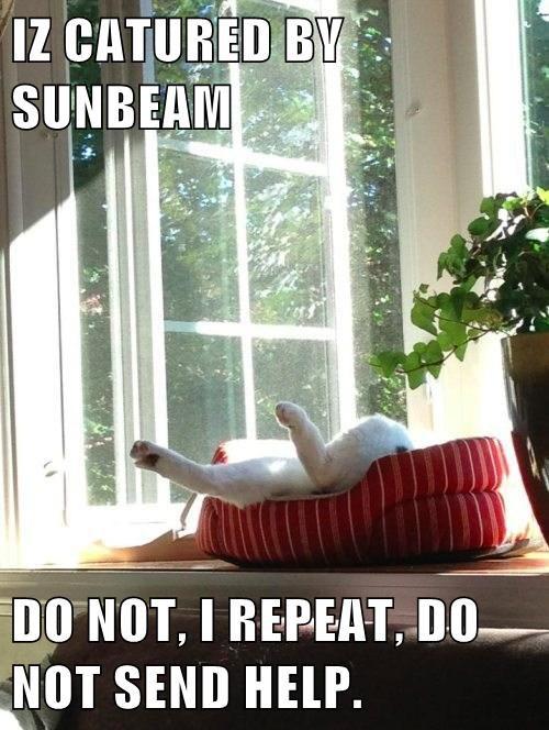 Cats cute happy sun - 8153107968