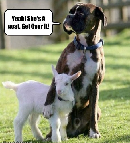 Yeah! She's A goat. Get Over It!