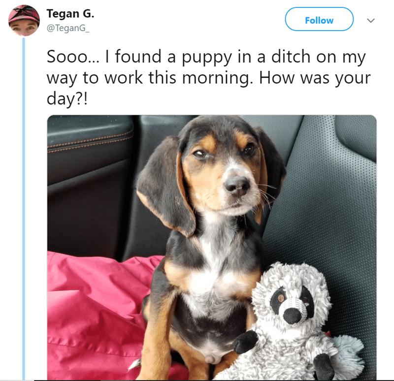 dogs adoption Twitter Thread puppy - 8153605