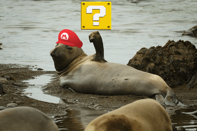 list seal photoshop battle - 815365
