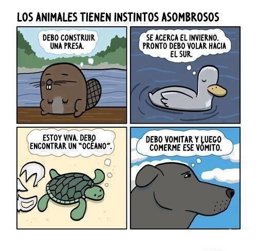 viñetas perros animales - 8153745408