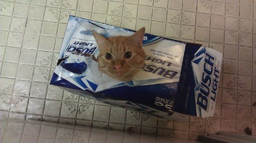 beer Cats funny wtf - 8153775360