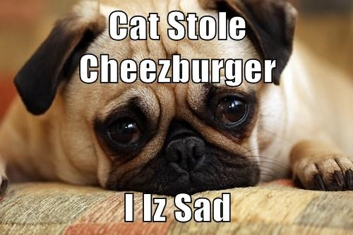 Cats cute dogs summer Sad cheezbuger - 8153837312
