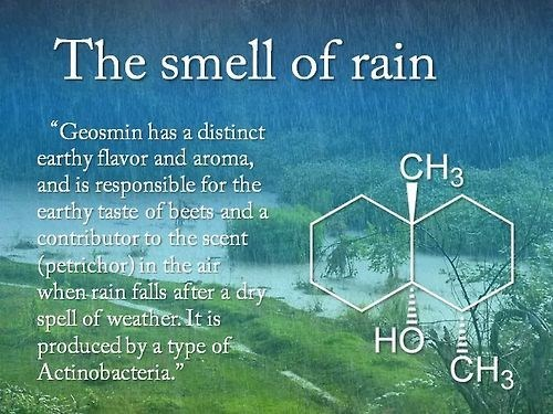 funny science smell rain