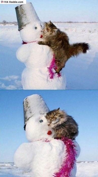 Cats cute funny snowmen love - 8154057472