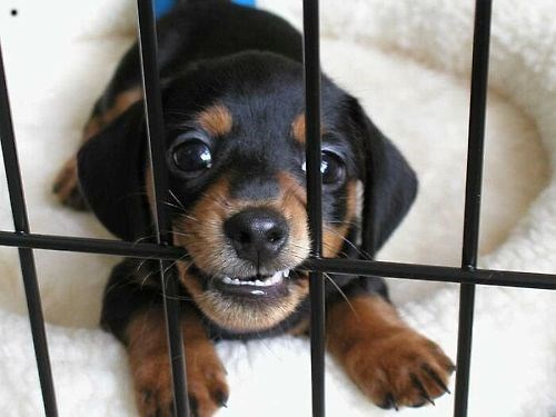 cute cage crate puppies squee - 8154065920