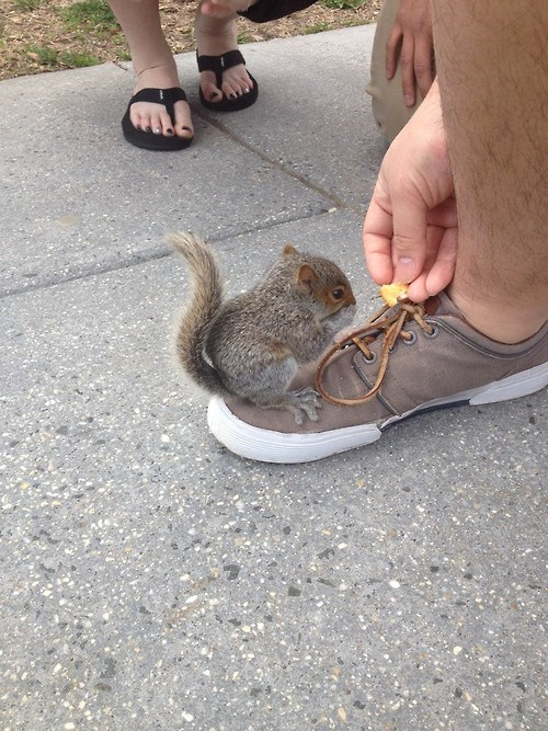Babies,cute,stinky,squirrel