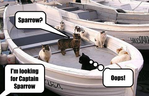 I'm looking for Captain Sparrow Sparrow? Oops!