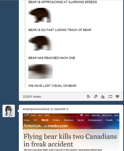 bears tumblr failbook g rated - 8154169856