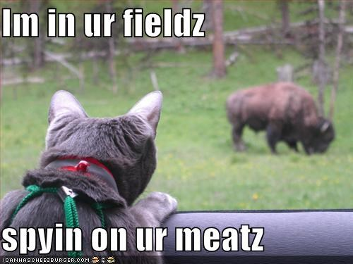 Cheezburger Image 815427328