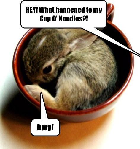 bunnies cute food noodles thief - 8154381824