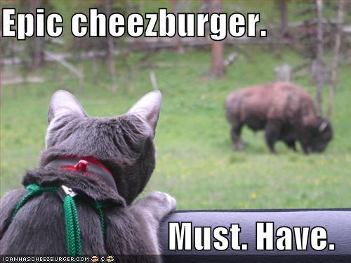 Cheezburger Image 815467264