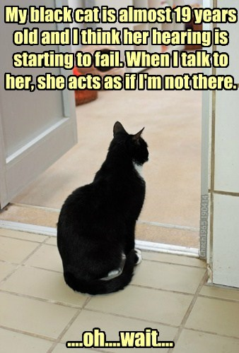 ignoring attitude Cats funny - 8155245312