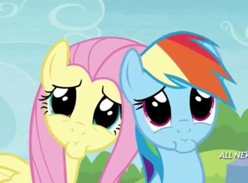 fluttershy squee rainbow dash - 8155308800