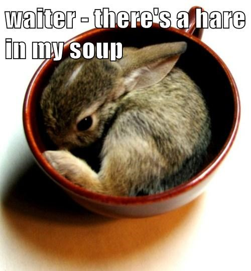 rabbits,restaurants,puns