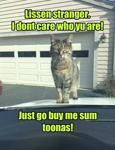 cars,Cats,human,tuna