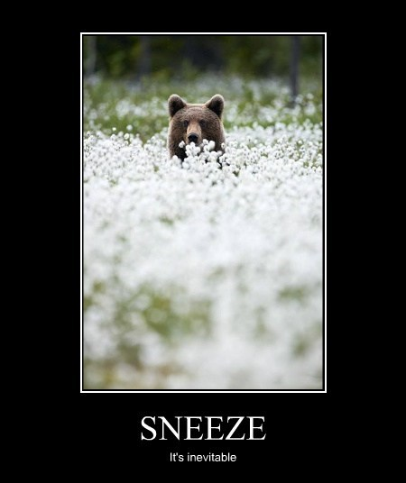 allergies,bears,sneeze,spring