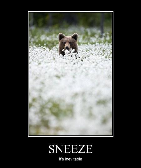 allergies bears sneeze spring - 8156905216