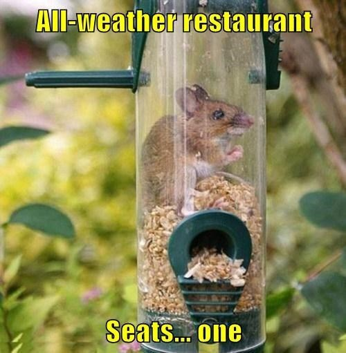 cute,feeder,mice,restaurant