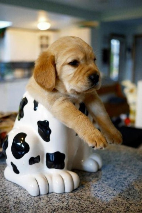cute,puppies,cookie jar