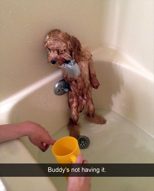 baths,dogs,done,funny